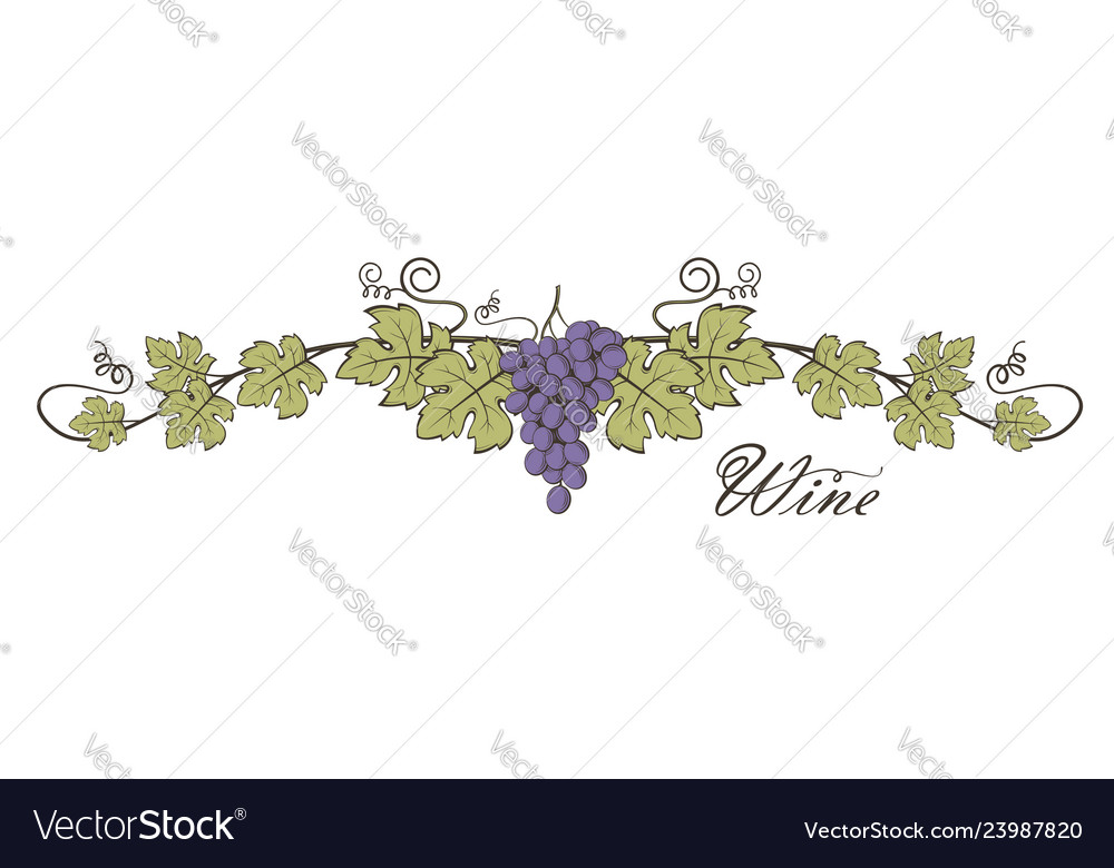 Grape bunches image