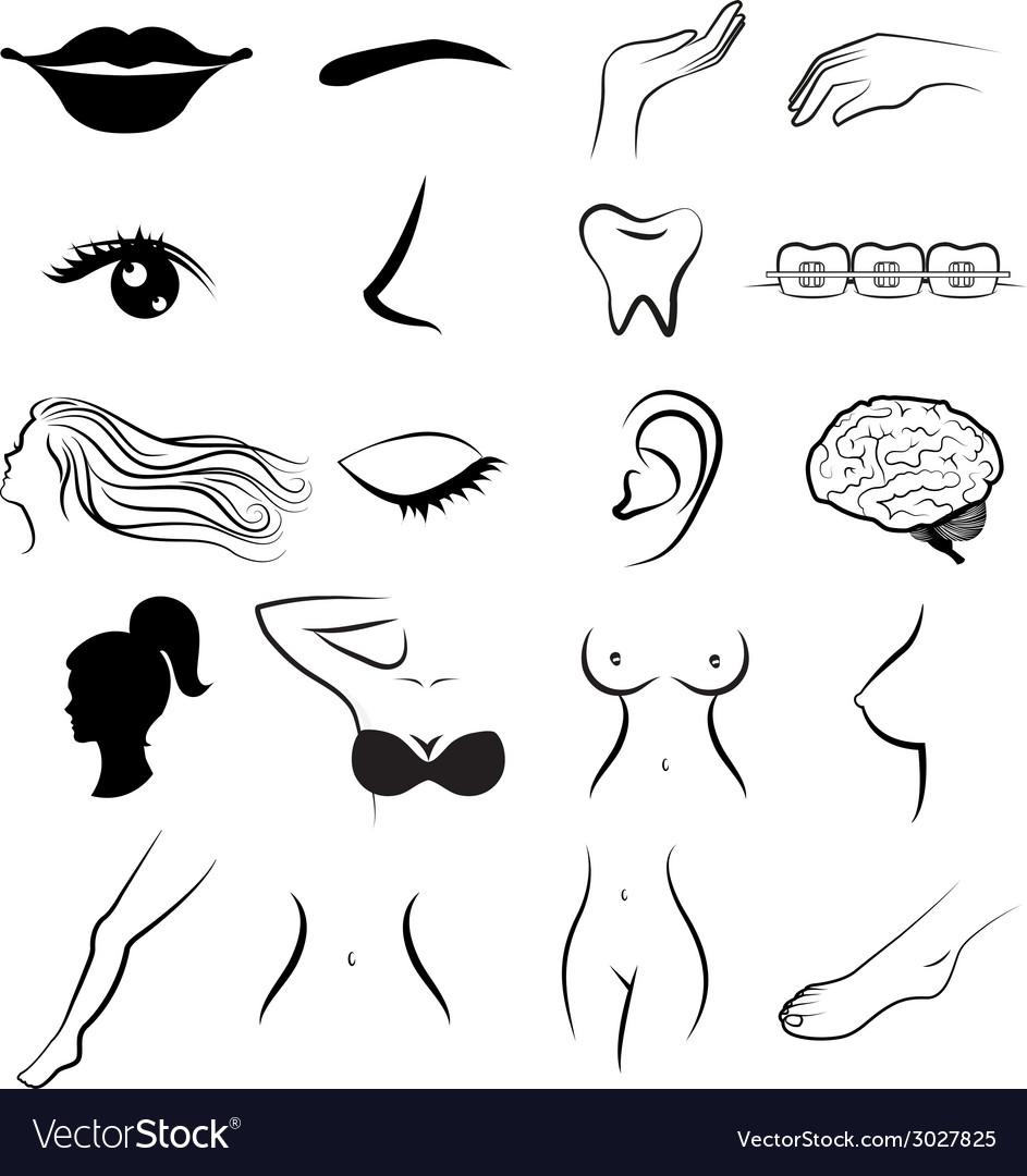 Women body parts human