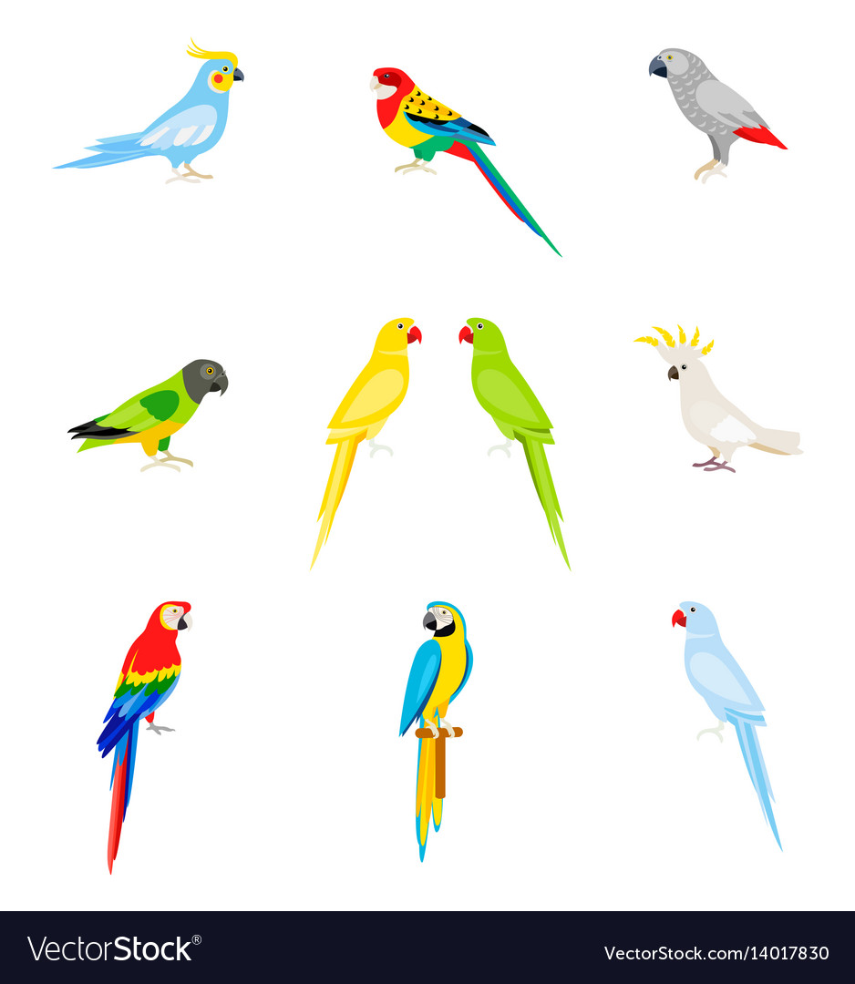 A set of parrots in a flat style