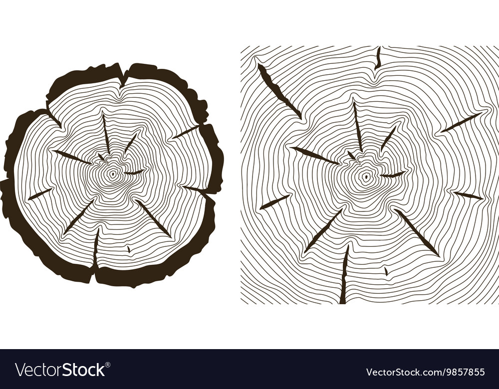 tree growth rings saw trunk cuts vector image