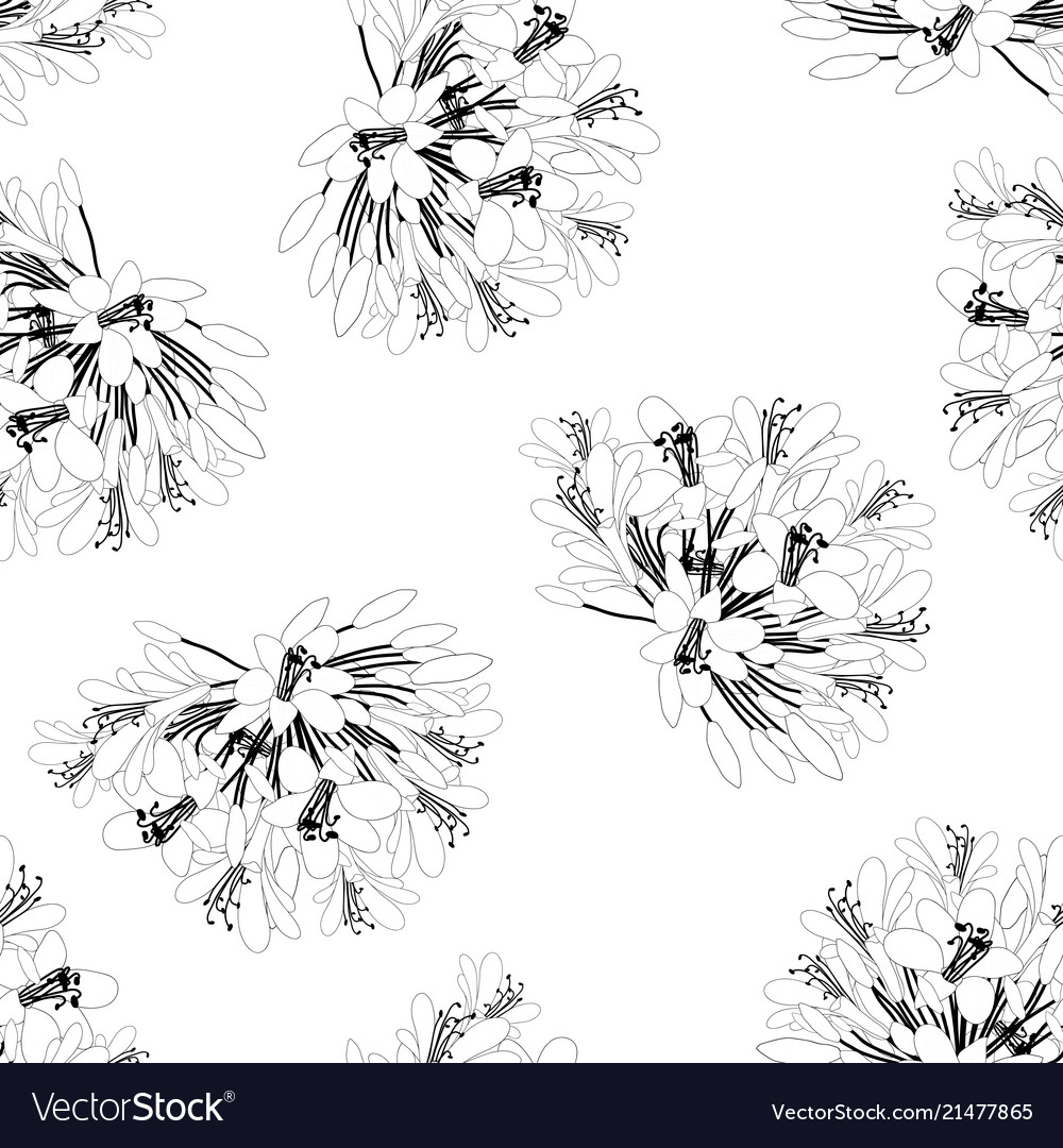 Agapanthus flower seamless on white background