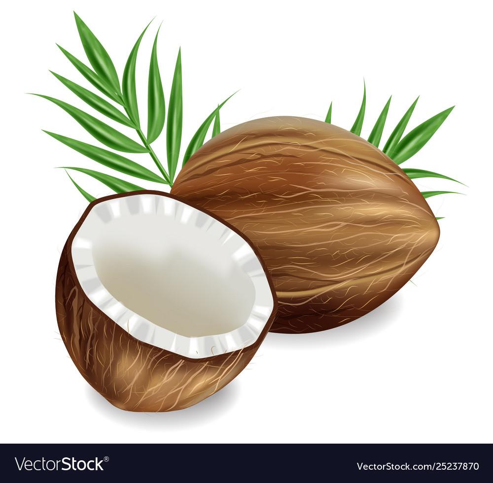 Coconuts realistic template tropic exotic