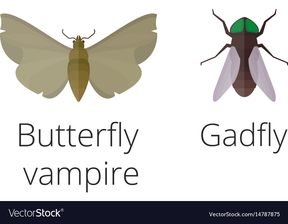 Colorful insects icons isolated wildlife wing vector image