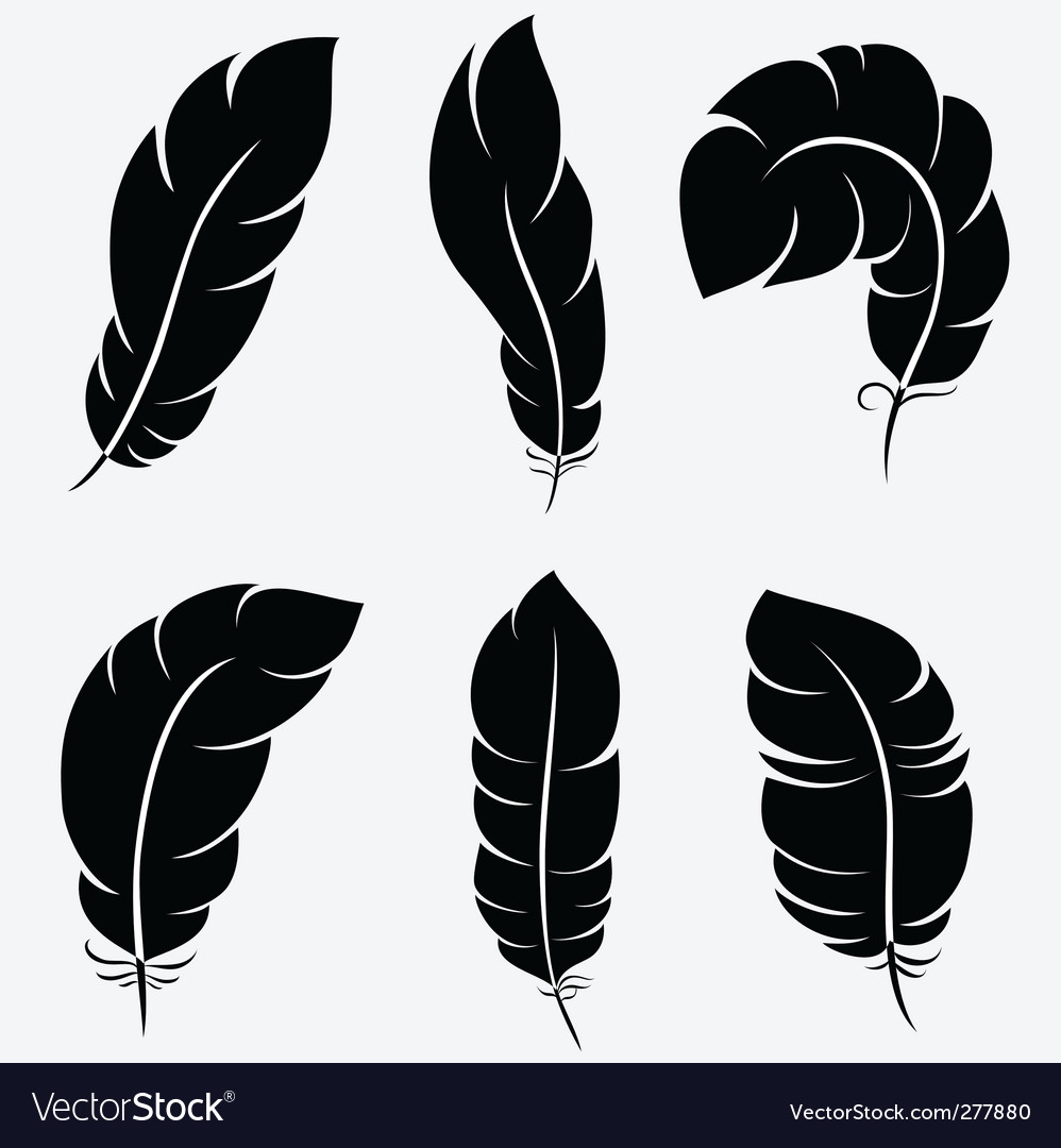Feathers collection