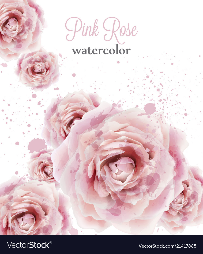 Watercolor pink roses isolated beautiful
