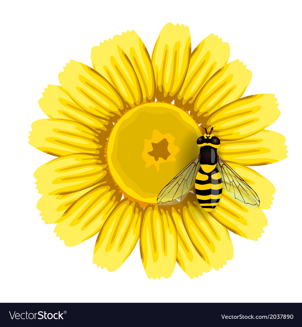 Bee and Sunflower Royalty Free Vector Image - VectorStock