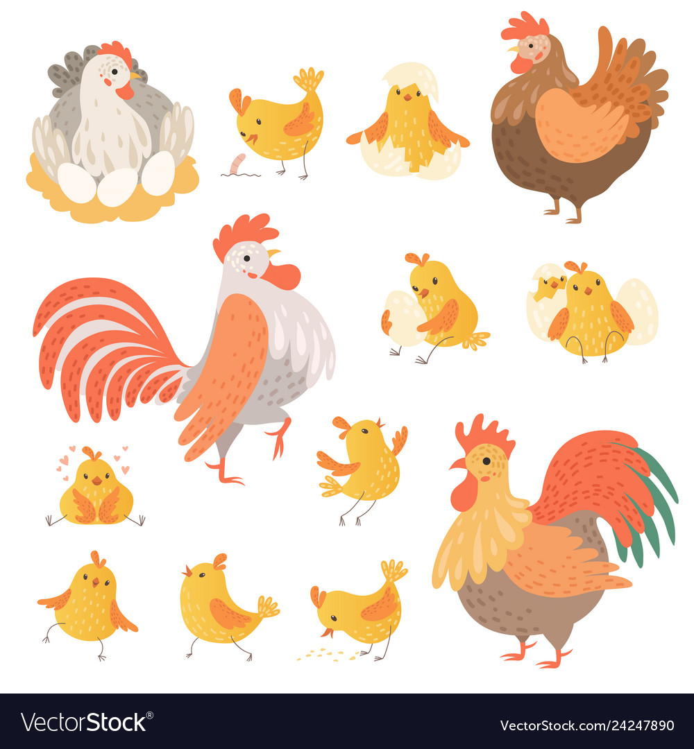 Chicken and rooster funny domestic farm animals