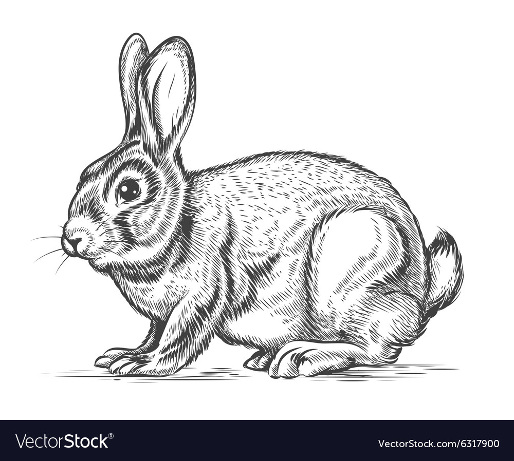 Hand drawn rabbit in engraving style