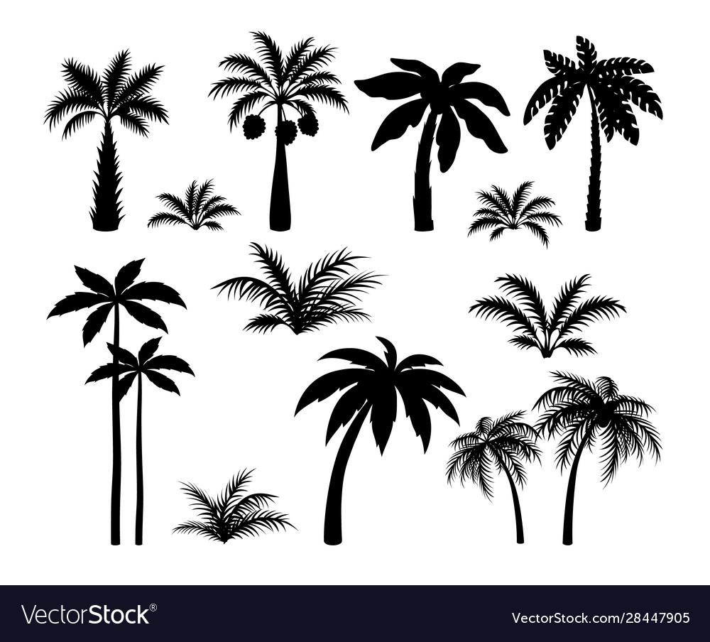 Silhouette palm trees set tropical black jungle