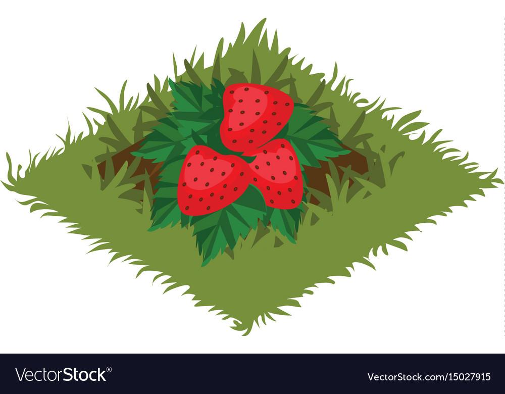 Isometric cartoon fruit garden bed with vector image