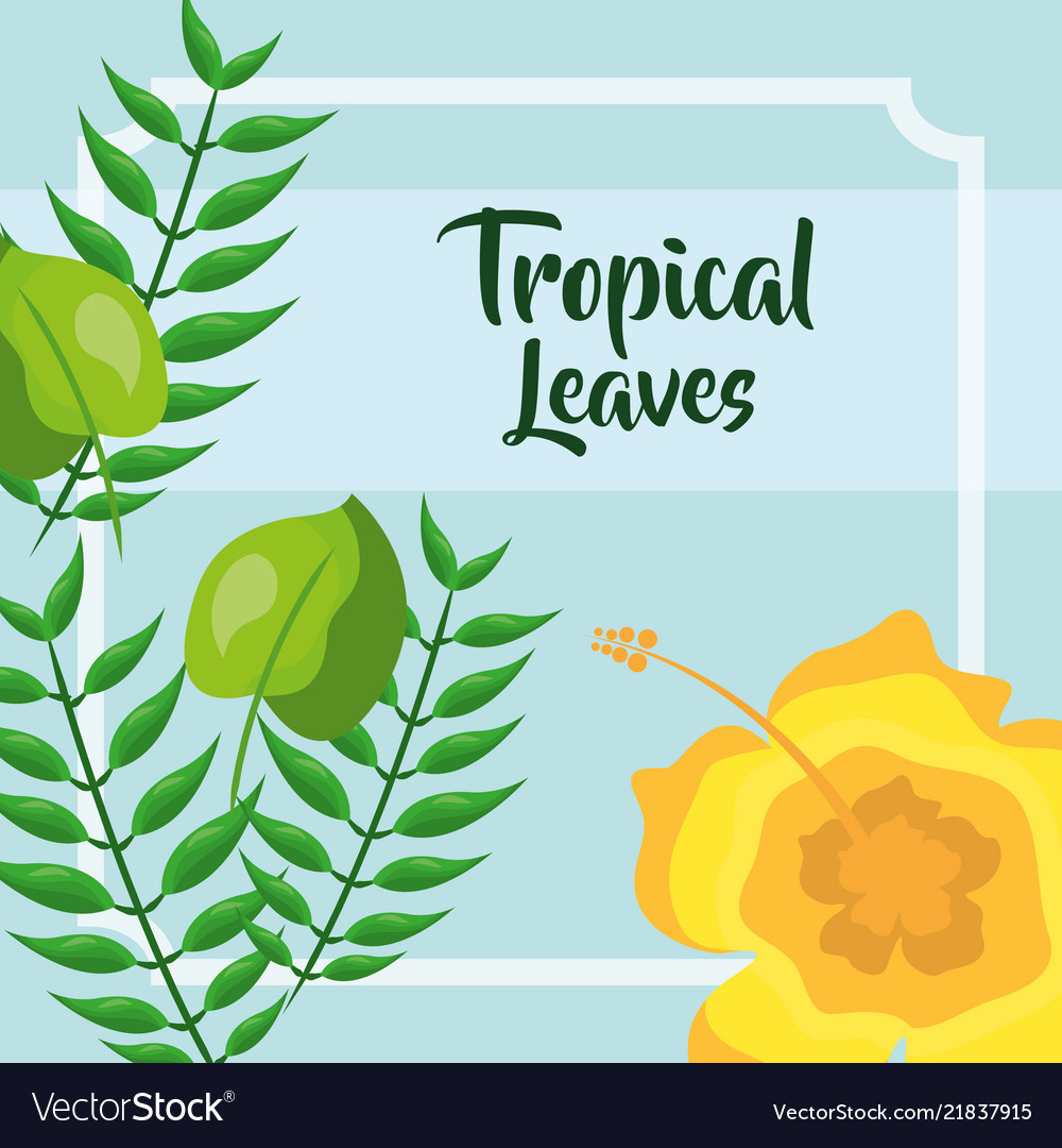 Yellow Flower Branches Frame Tropical Leaves Vector Image