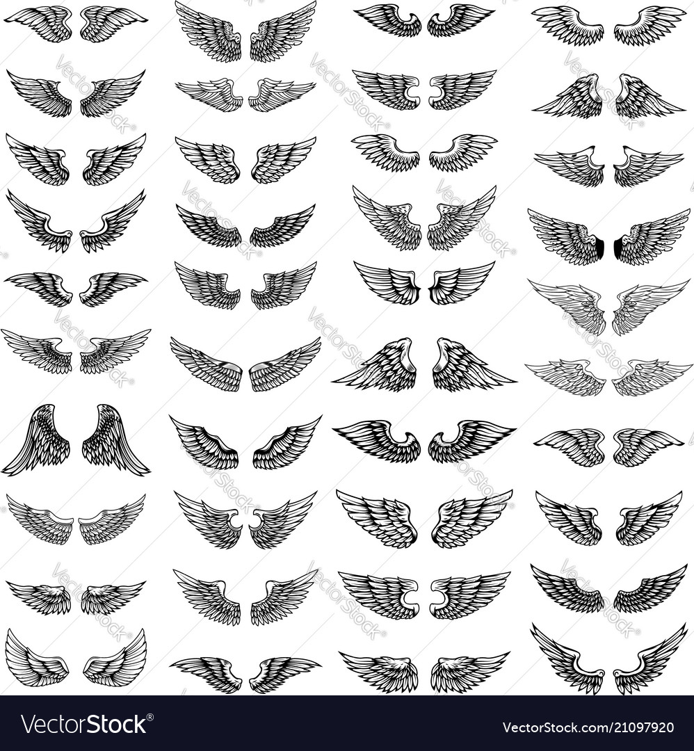 Big set of wings on white background design