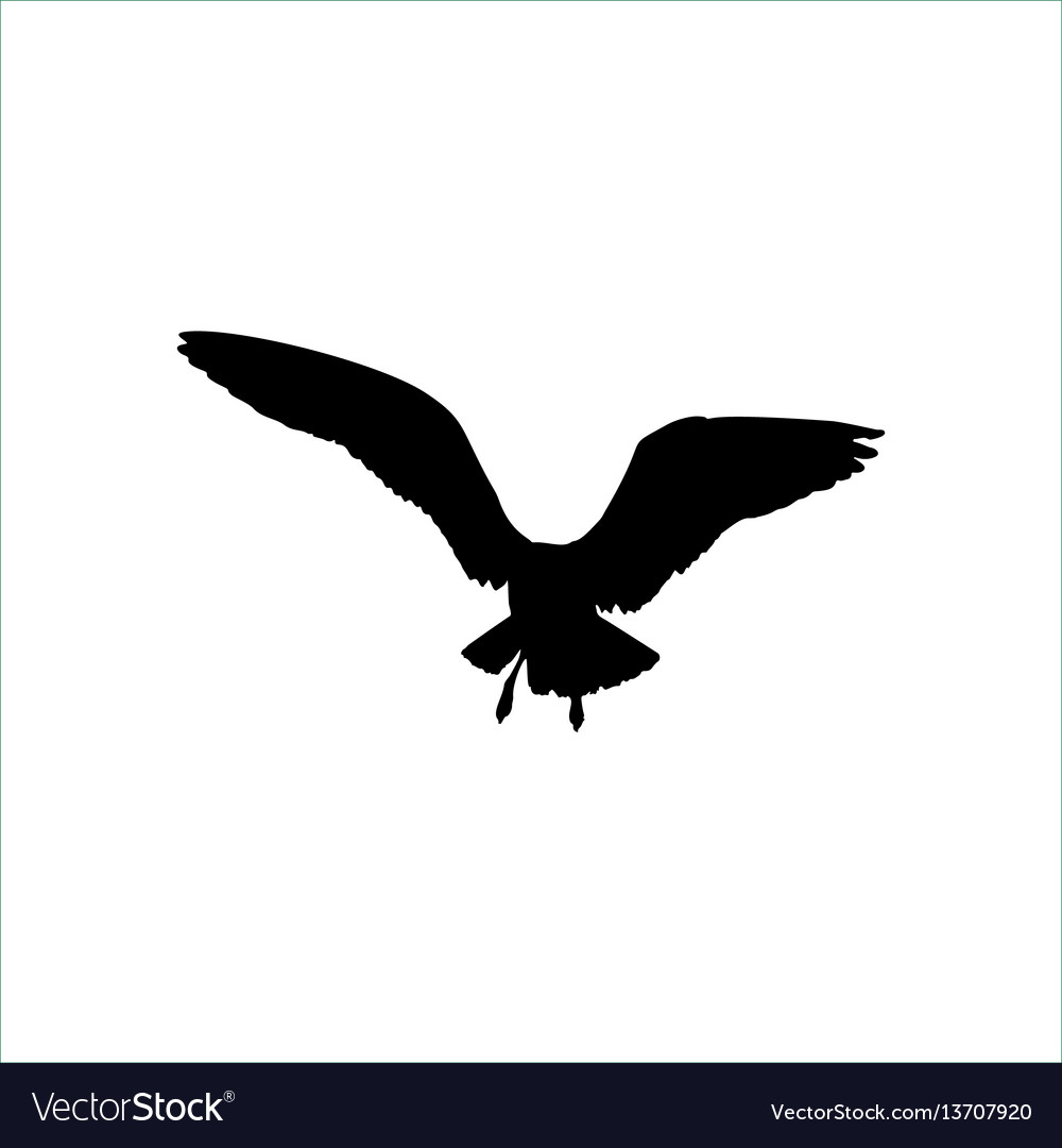 Flying seagull bird black silhouette isolated on