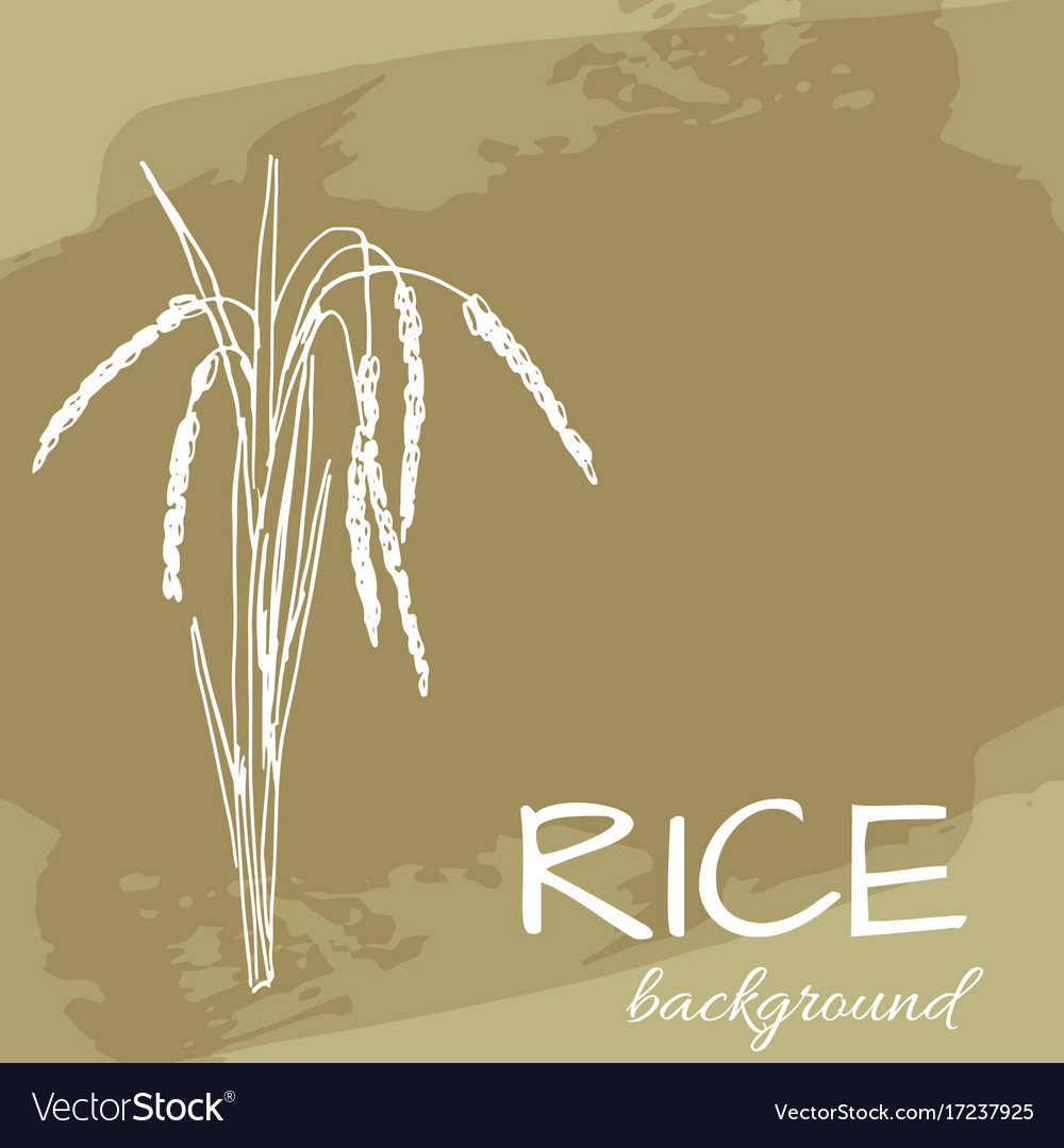 Background with rice logo hand-drawn plant