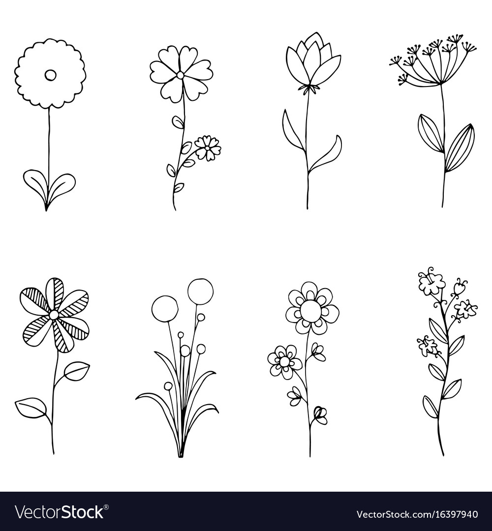 Set of doodle flora wild and nature flowers on