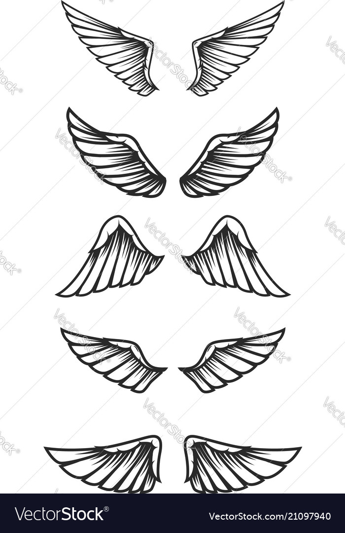 Set of wings on white background design elements