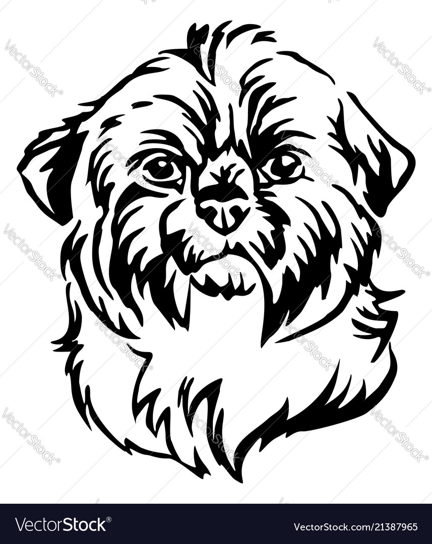 Smiling Shih Tzu Drawing by Kate Sumners   1080x857