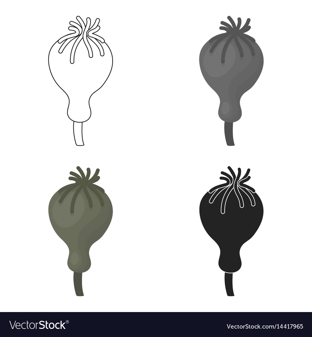 Opium poppy icon in cartoon style isolated on