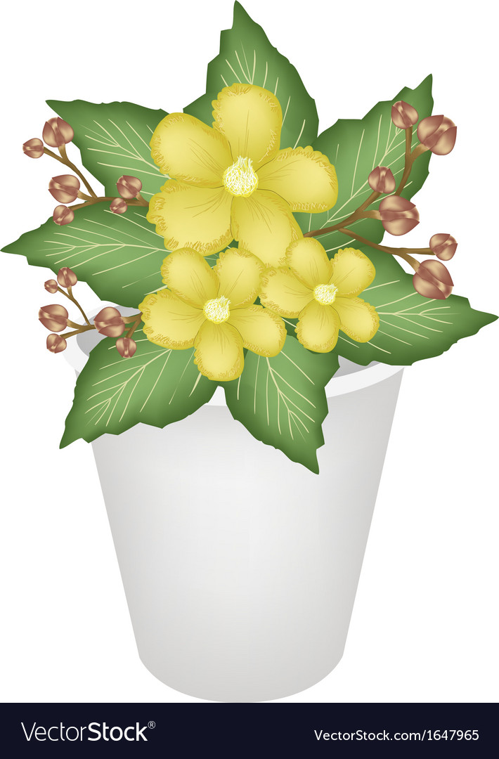 Yellow simpor flowers in a flower pot royalty free vector yellow simpor flowers in a flower pot vector image mightylinksfo