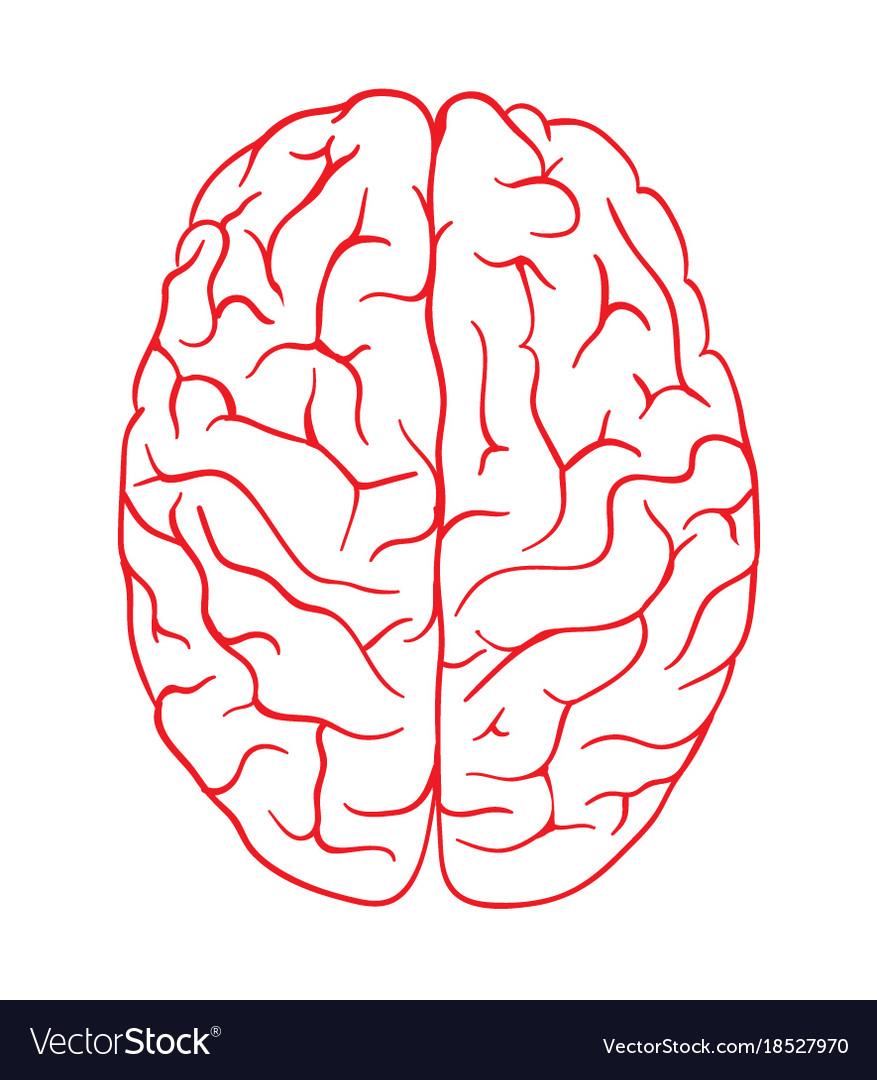 Brain logo silhouette top view design Royalty Free Vector