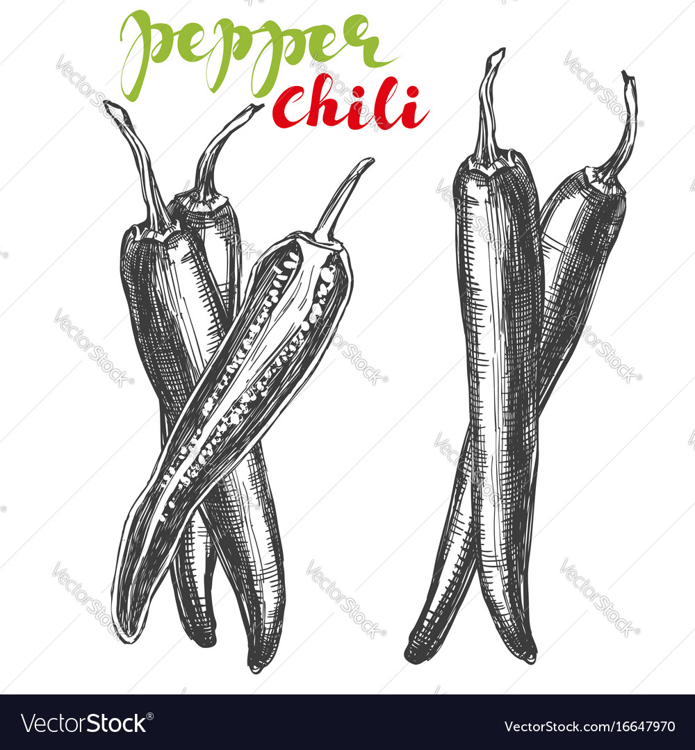 Chili peppers vegetable set hand drawn