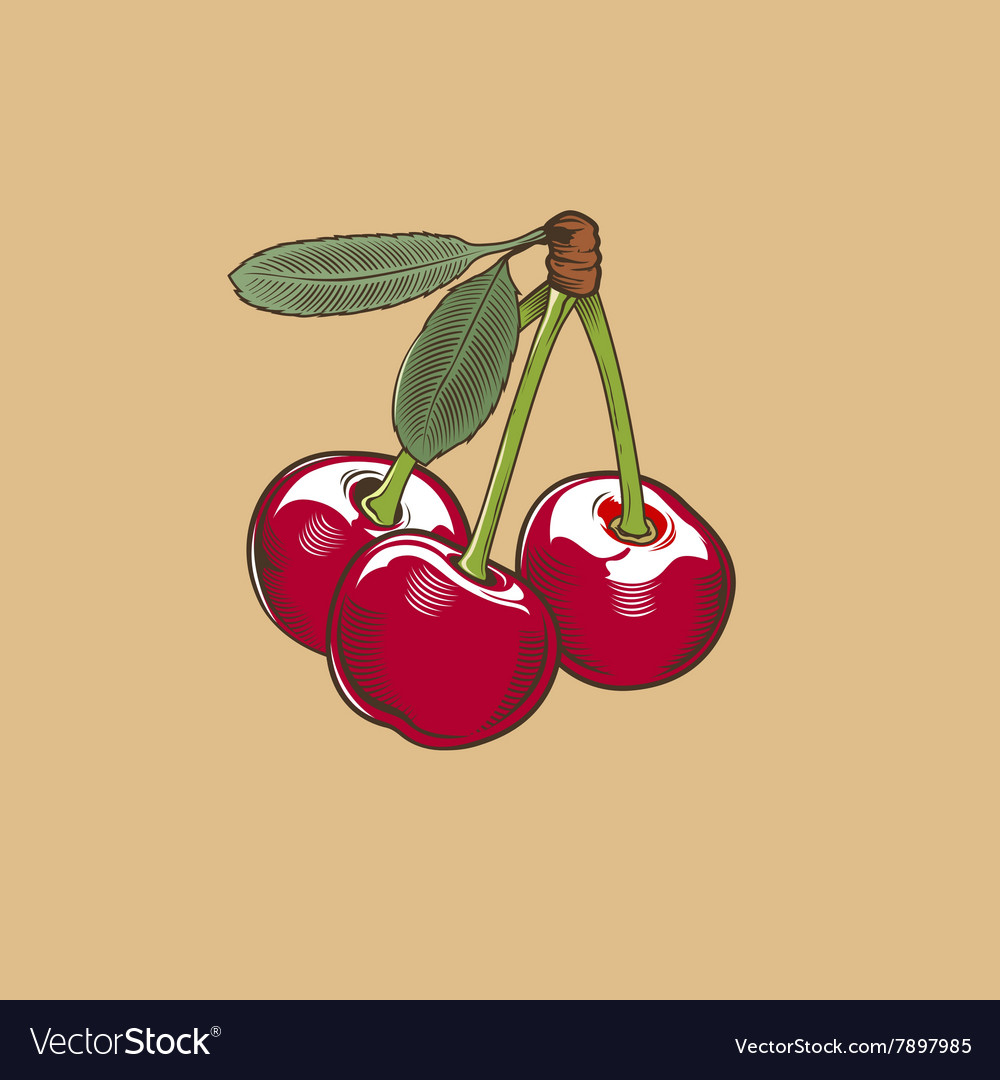 Cherry in vintage style Colored