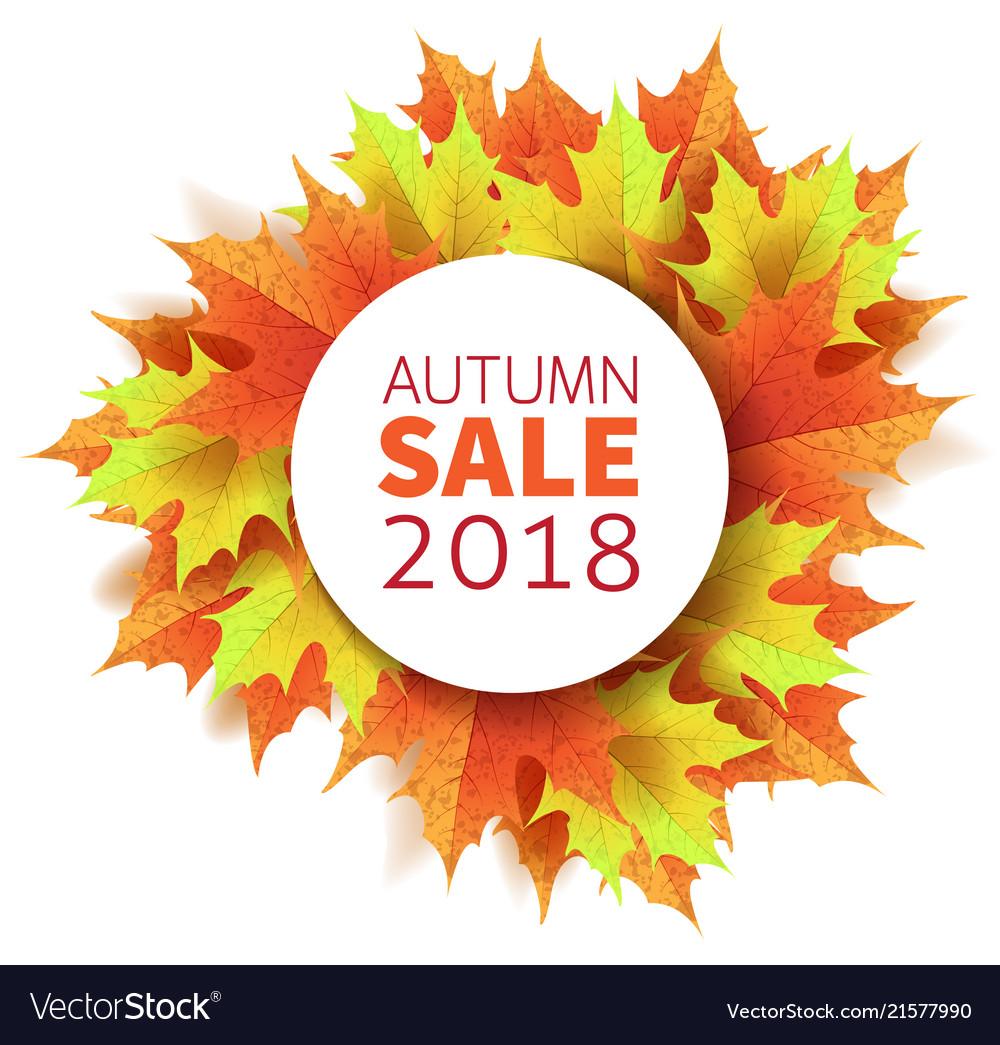 Autumn leaves bright colourful autumn maple