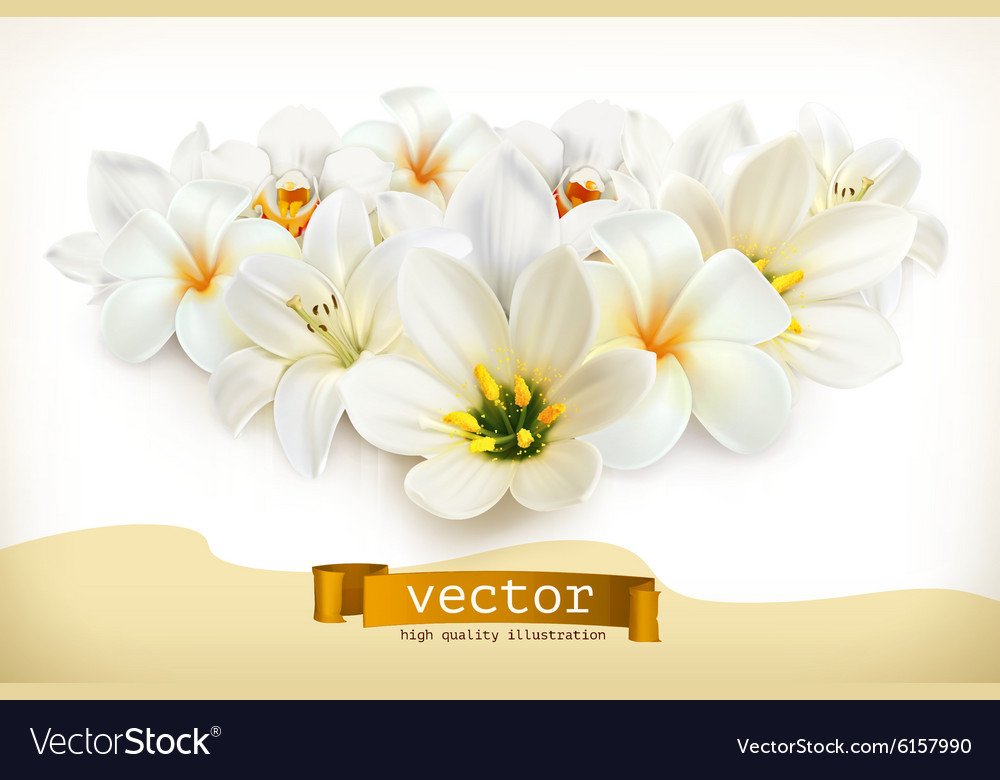 Bouquet of white flowers vector image