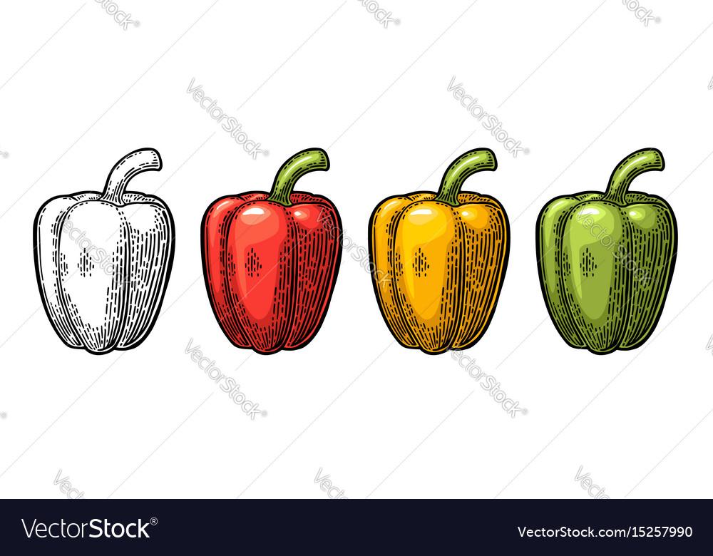 Sweet bell pepper vintage engraved vector image