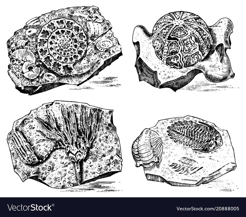 Fragment fossils skeleton of prehistoric dead