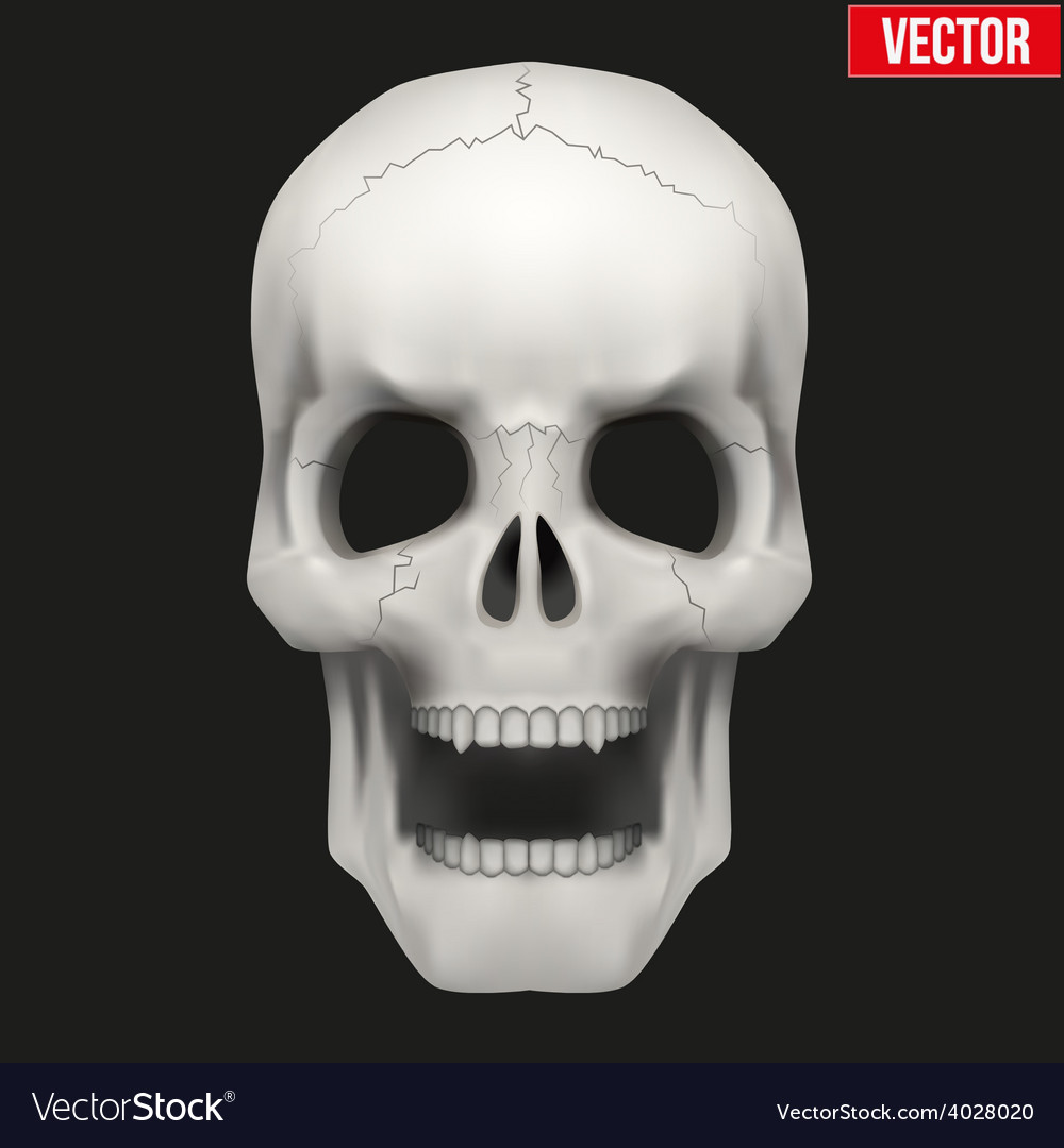 Human Skull With Open Mouth Royalty Free Vector Image