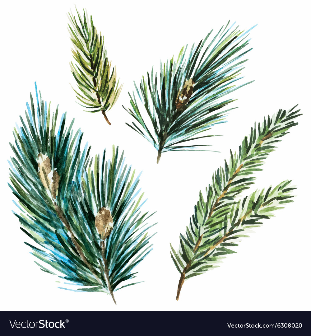 Raster Watercolor Fir Tree Branches Vector Image