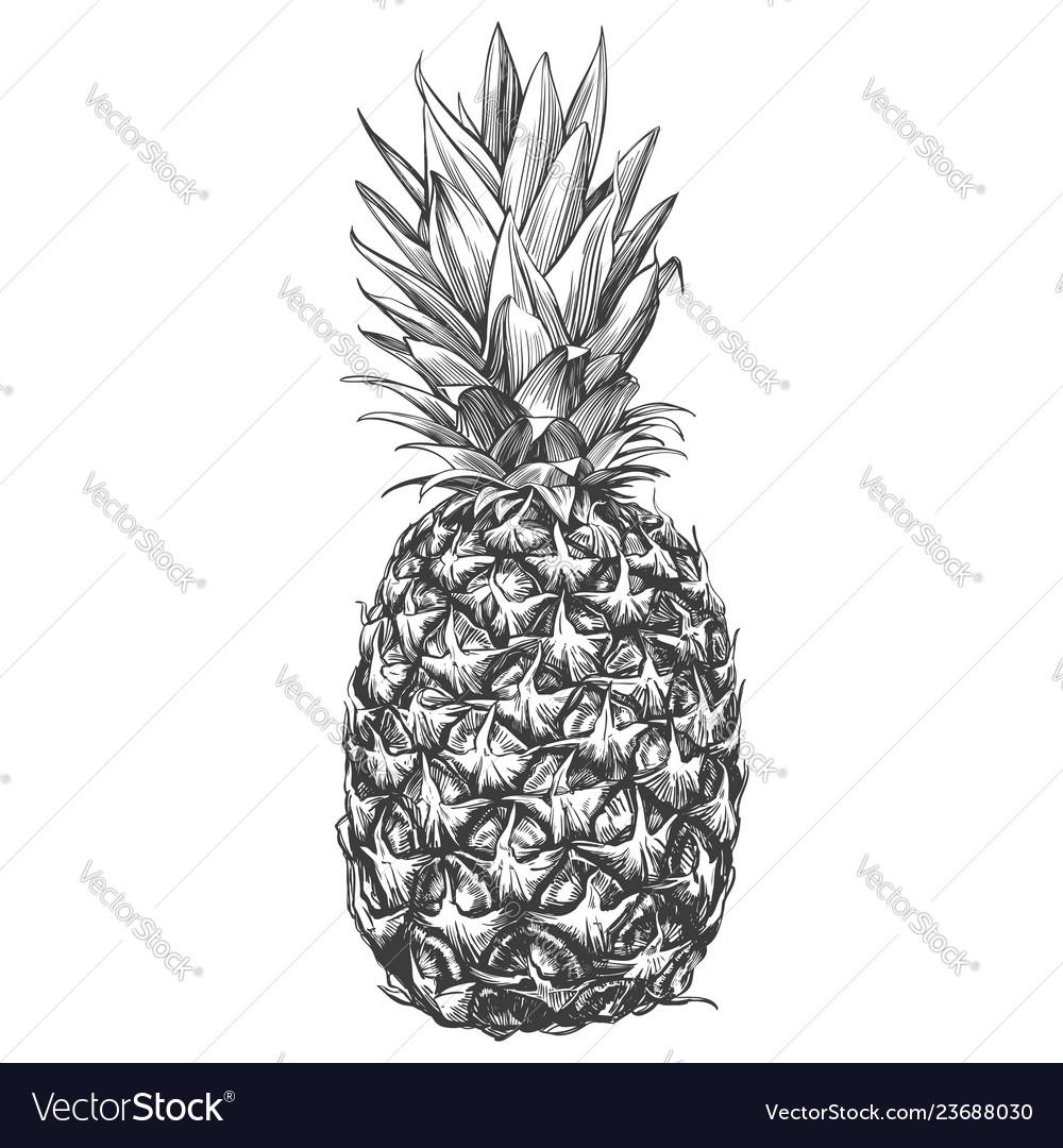 Fruit pineapple hand drawn