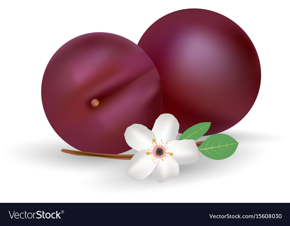 Plums icon fresh and juicy fruit isolated