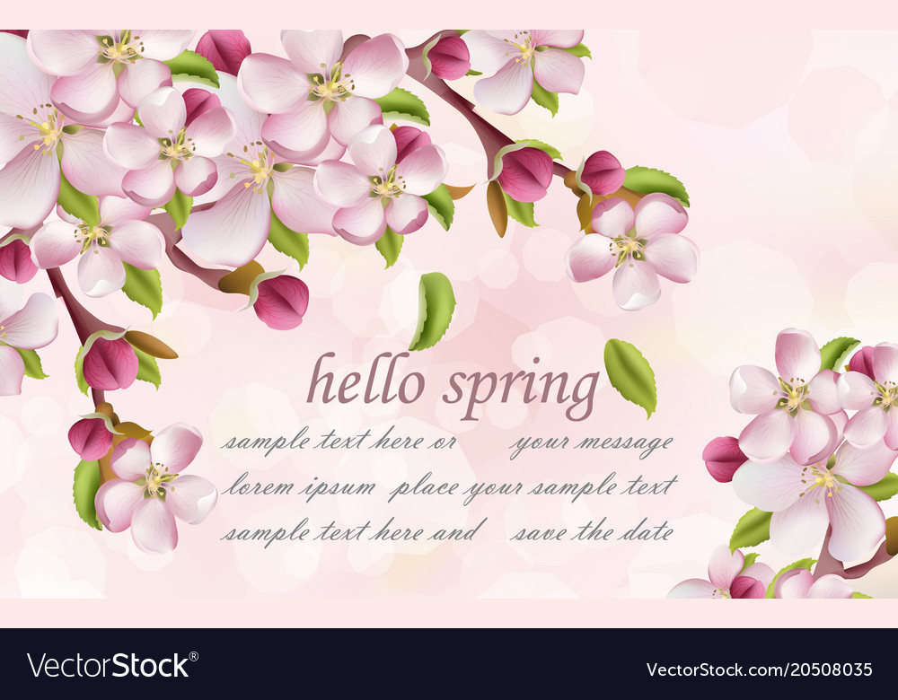 Cherry flowers spring background pink