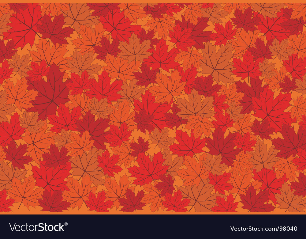 Red maple autumn leaves background vector image
