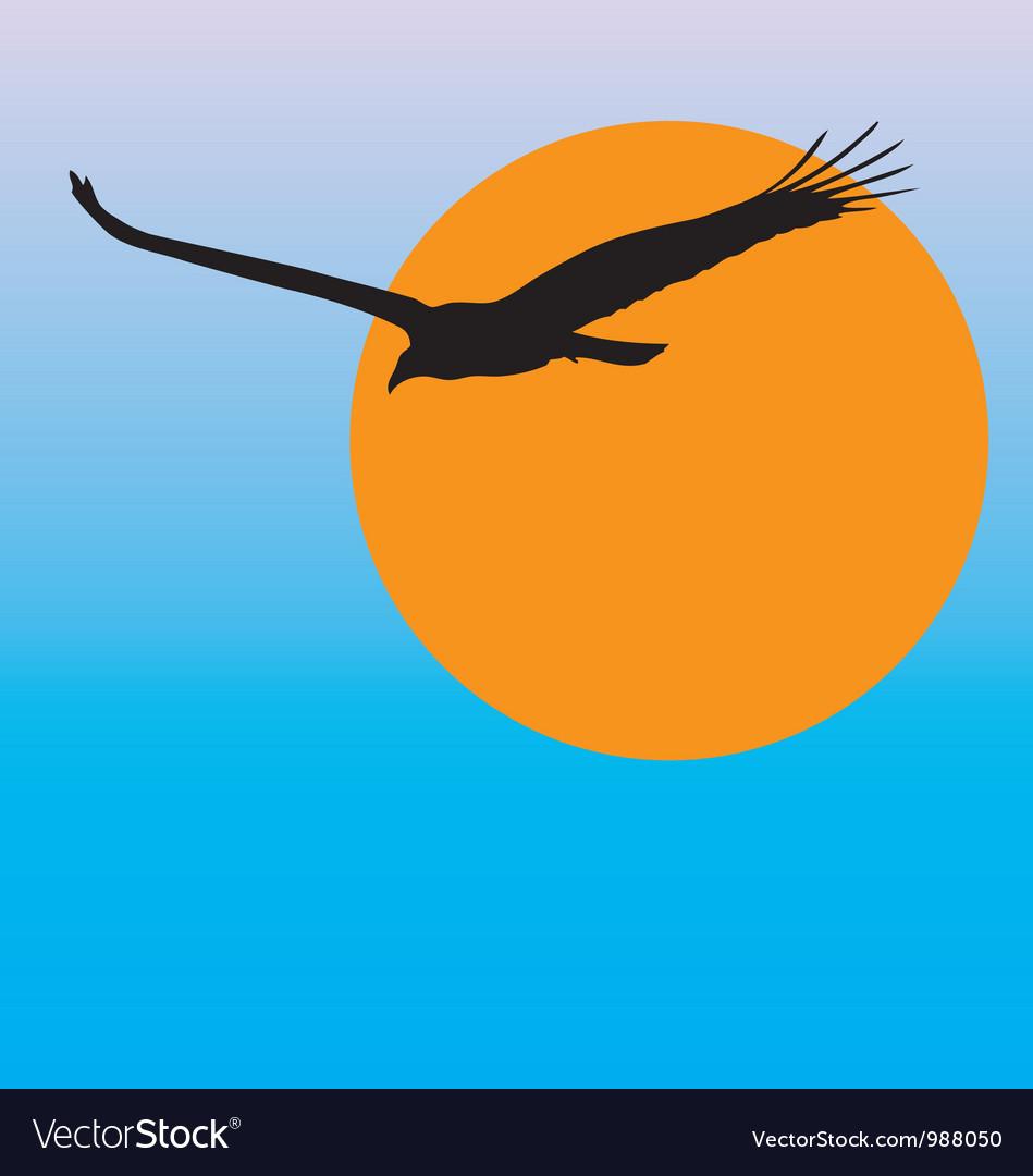 Turkey vulture vector image
