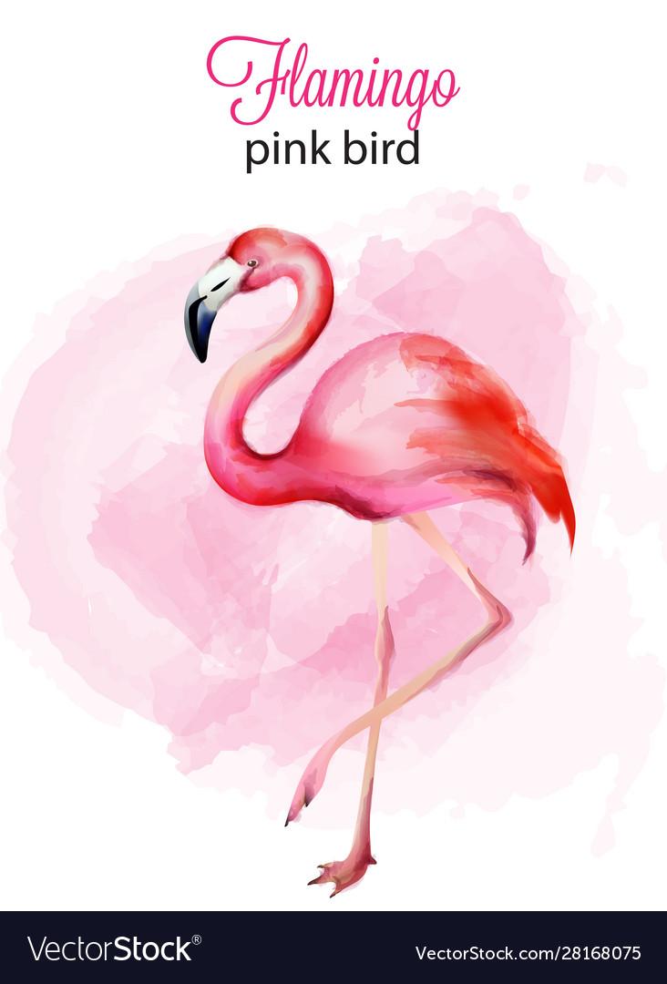Watercolor flamingo pink bird portrait