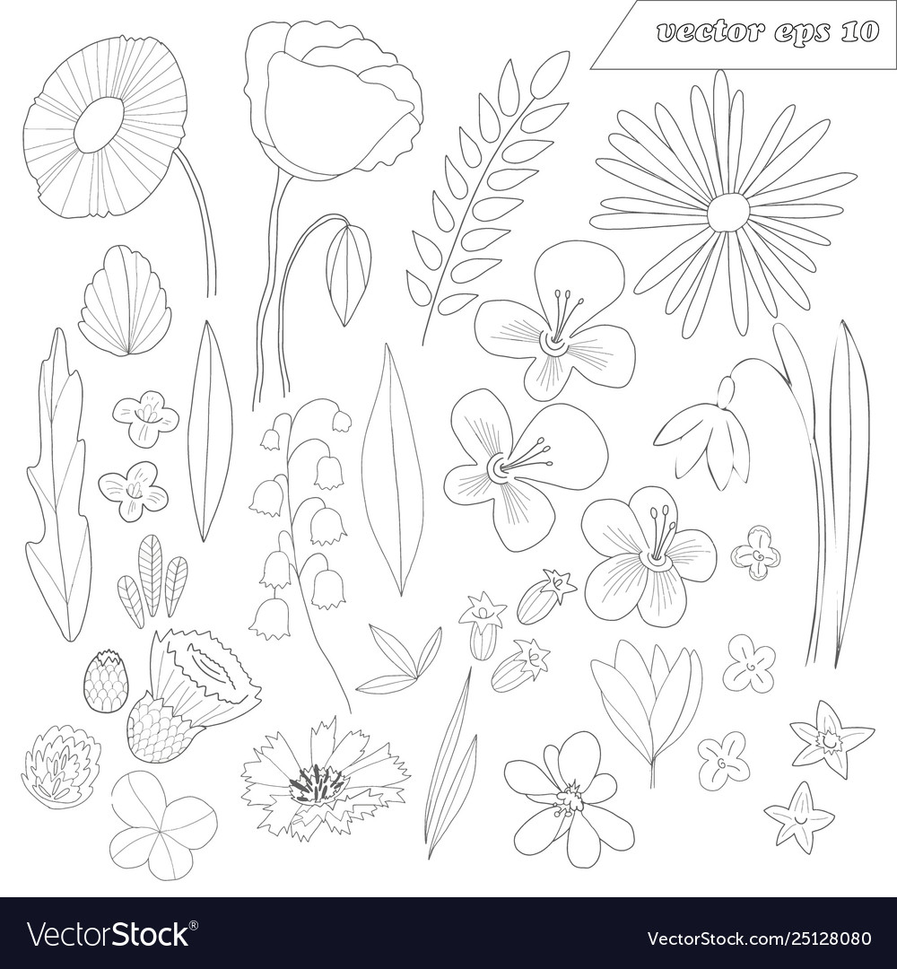 Hand drawn set wild outlined flowers