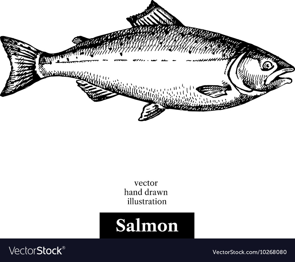 Hand drawn sketch seafood black and white vintage