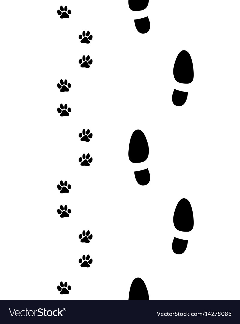 Shoes and dog paws vector image