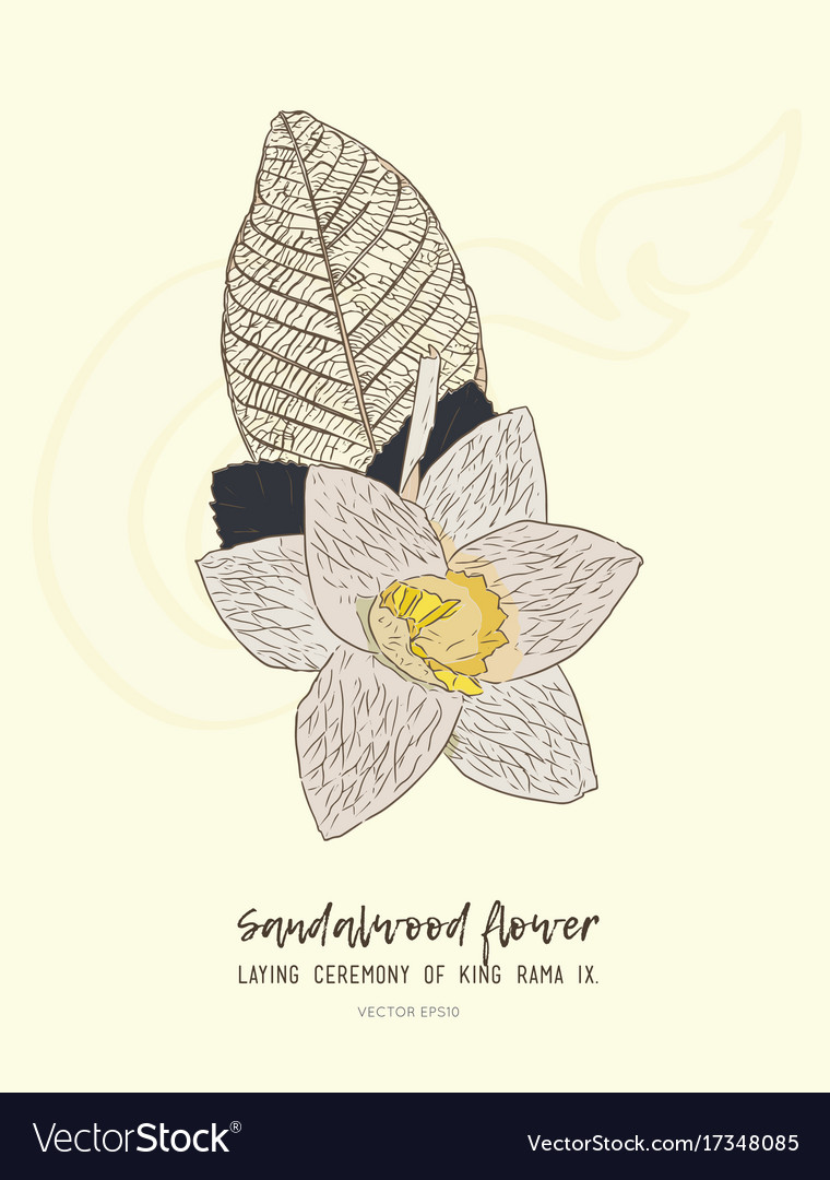 Thai artificial funeral daffodil flower or dok vector image izmirmasajfo