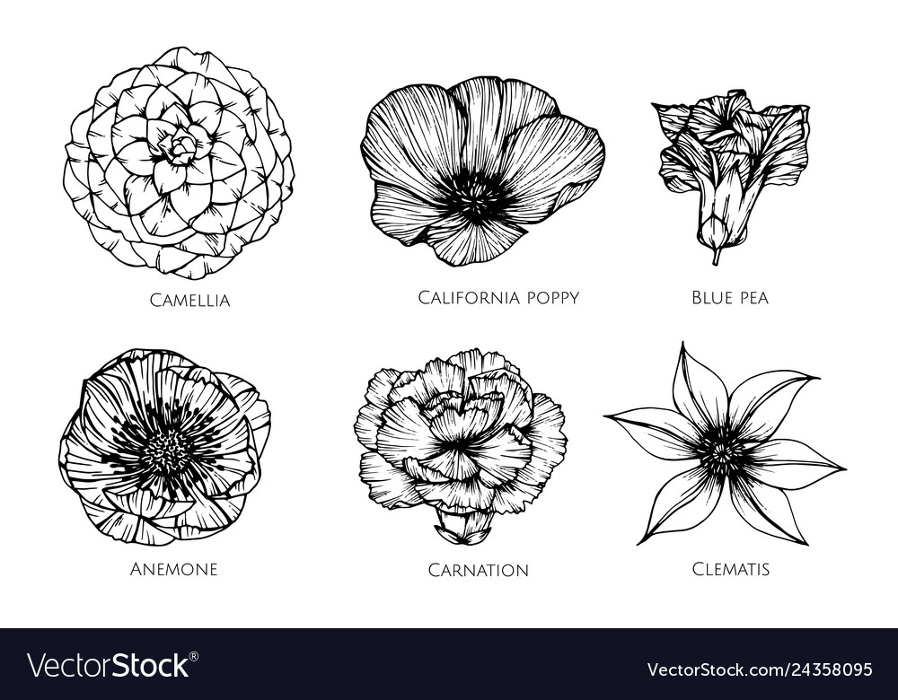 Collection set of flower drawing