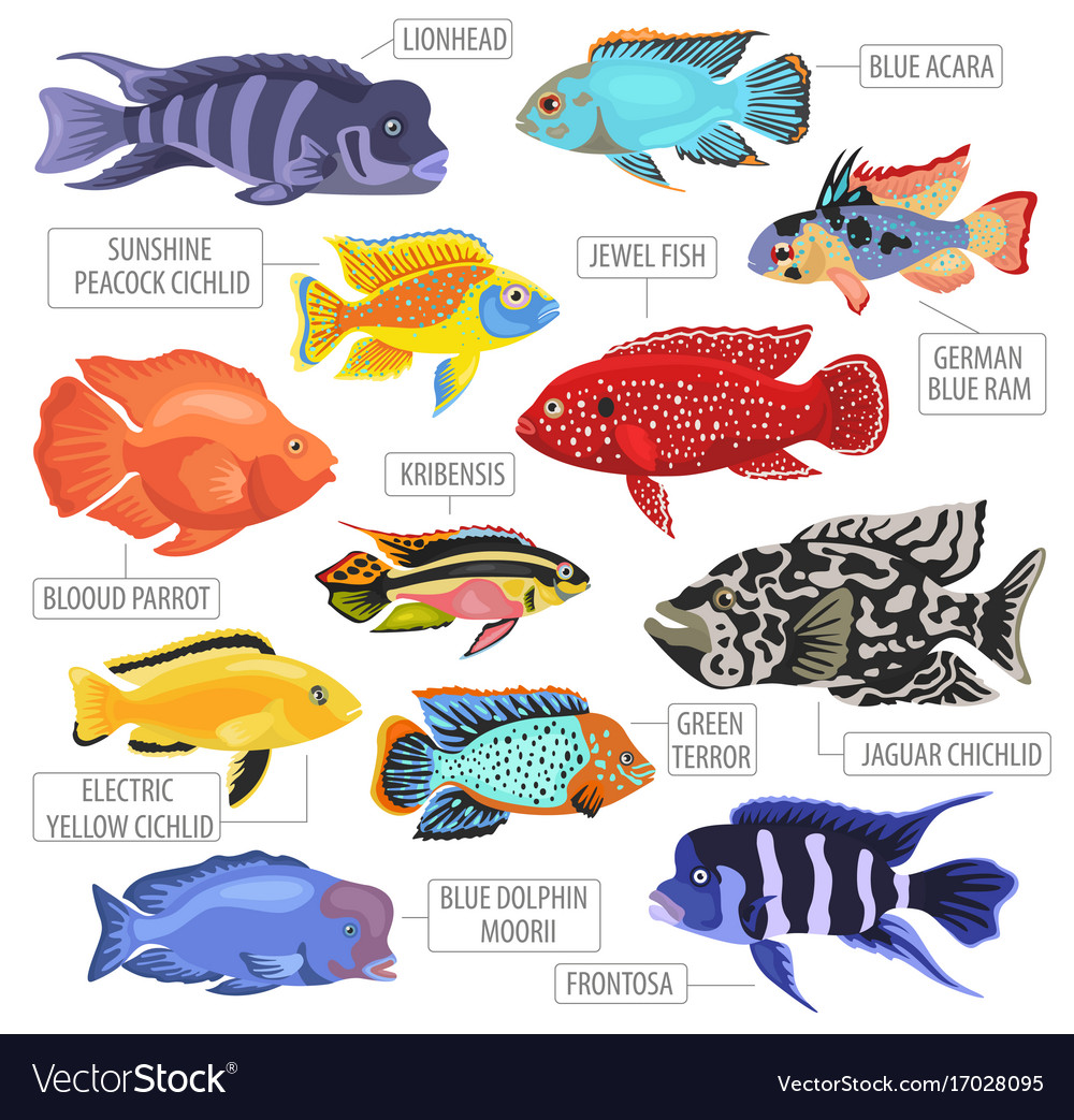 Freshwater aquarium fishes breeds icon set flat