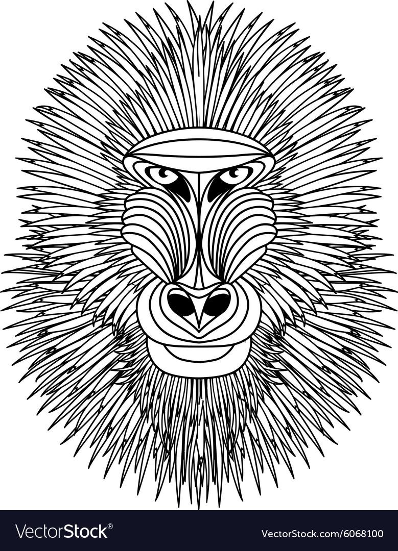 Mandrill vector image