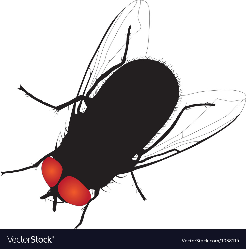 Musca & Domestica Vector Images (69)