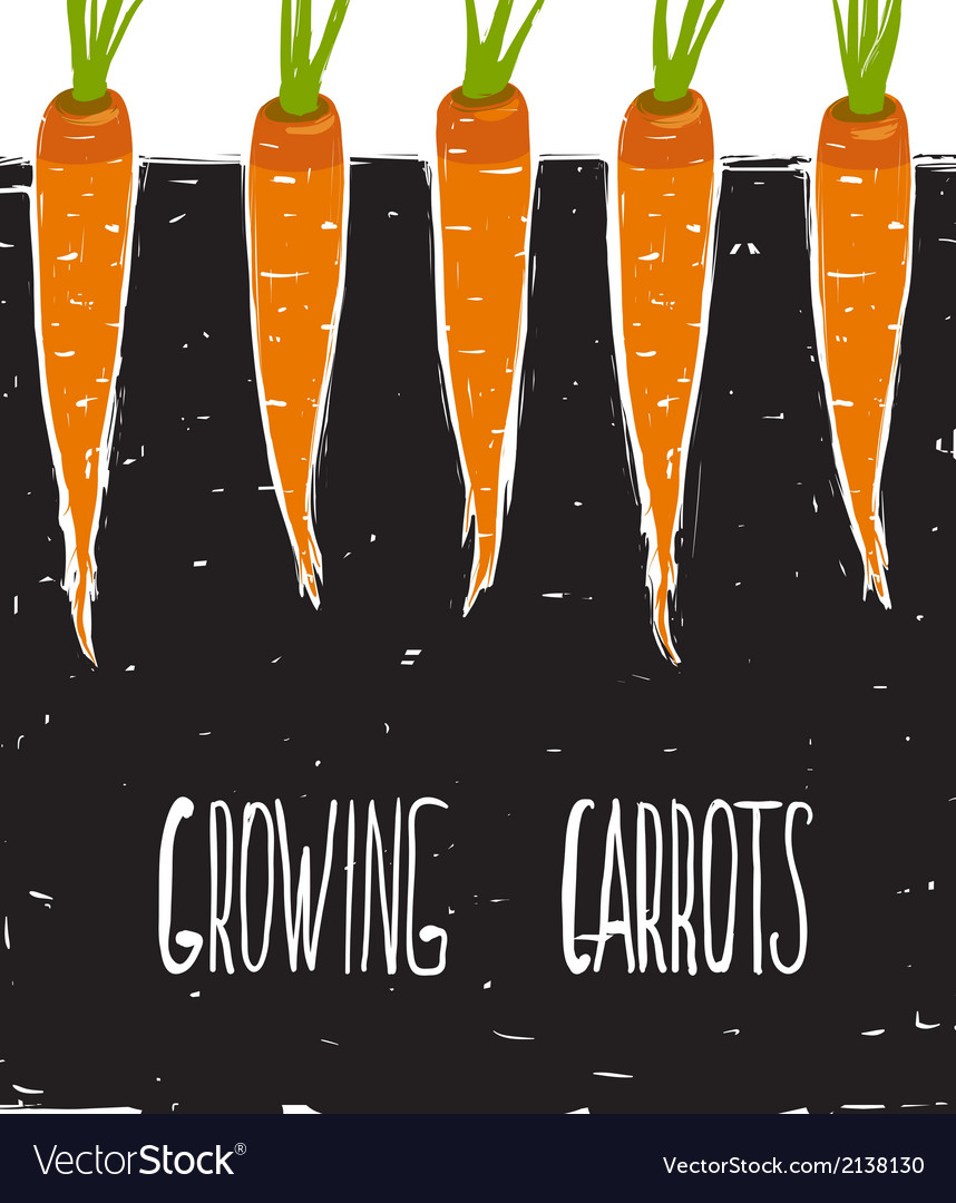 Growing Carrots Freehand Drawing and Lettering