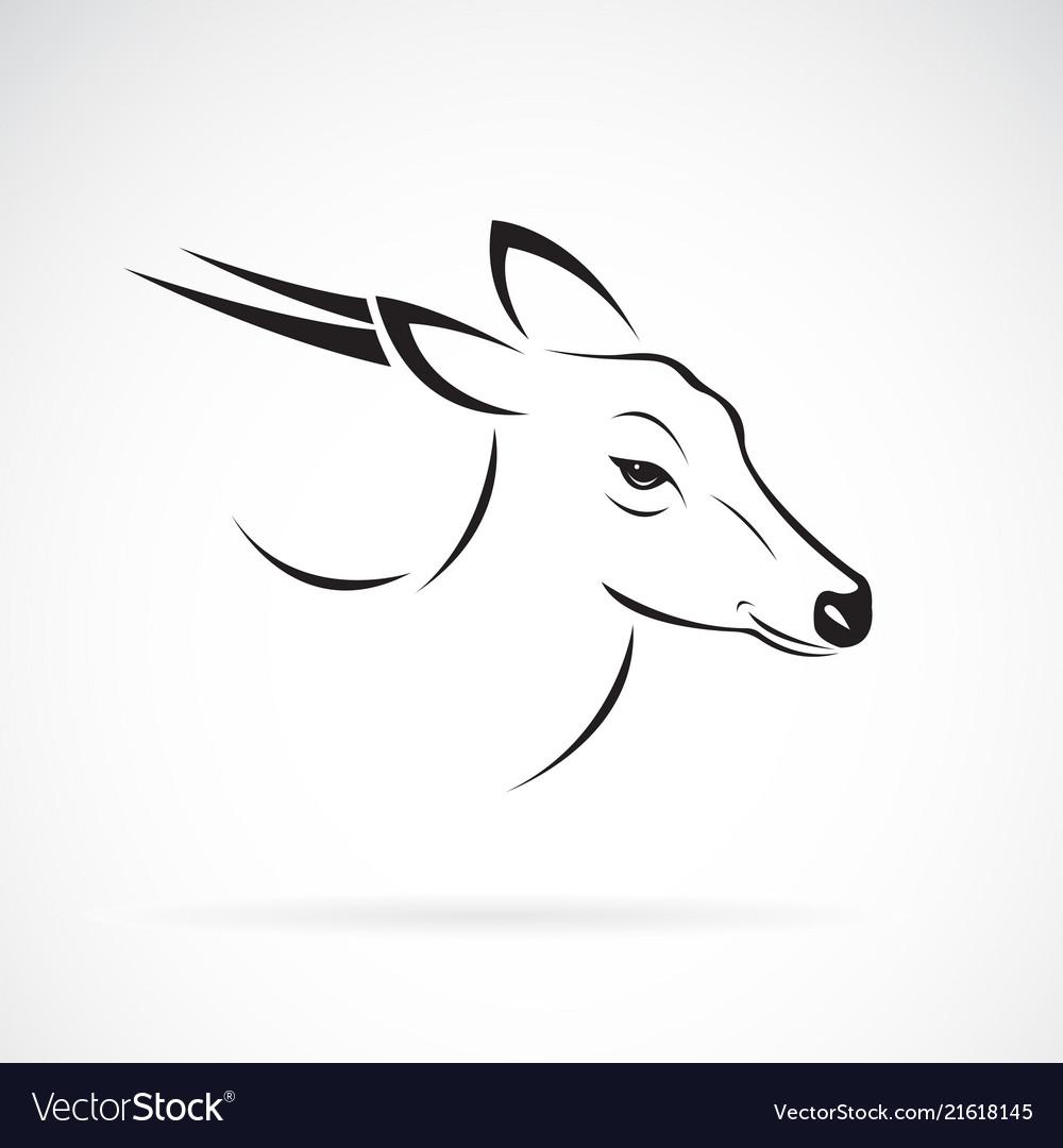 Barking deer or muntjac muntiacini on white