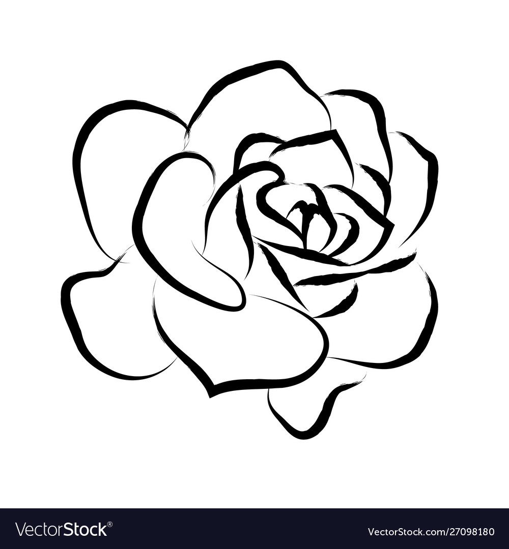 Line drawing black roses in a white background