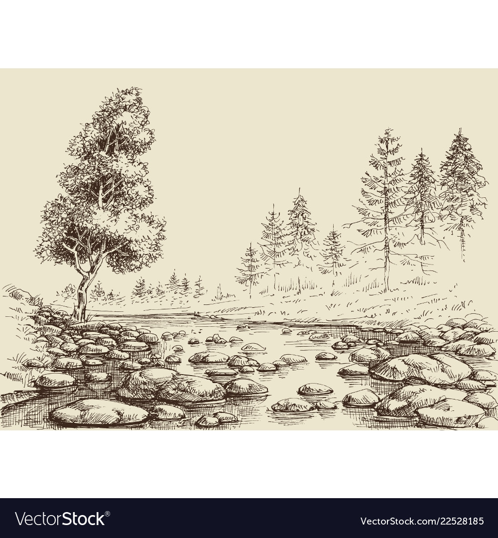 River Drawing Water Flow Rocks And Nature Vector Image